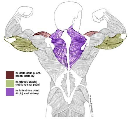 Trapézový sval cviky